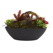 Mixed Succulent w/Oval Black Container