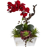 Holiday Orchid Succulent Garden Shabby Chic Planter