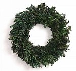 "18"" Preserved Oregon Boxwood Wreath"