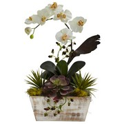 Orchid Succulent Garden Shabby Chic Planter