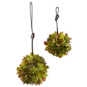 "7"" & 5"" Mixed Succulent Spheres (Set of 2)"