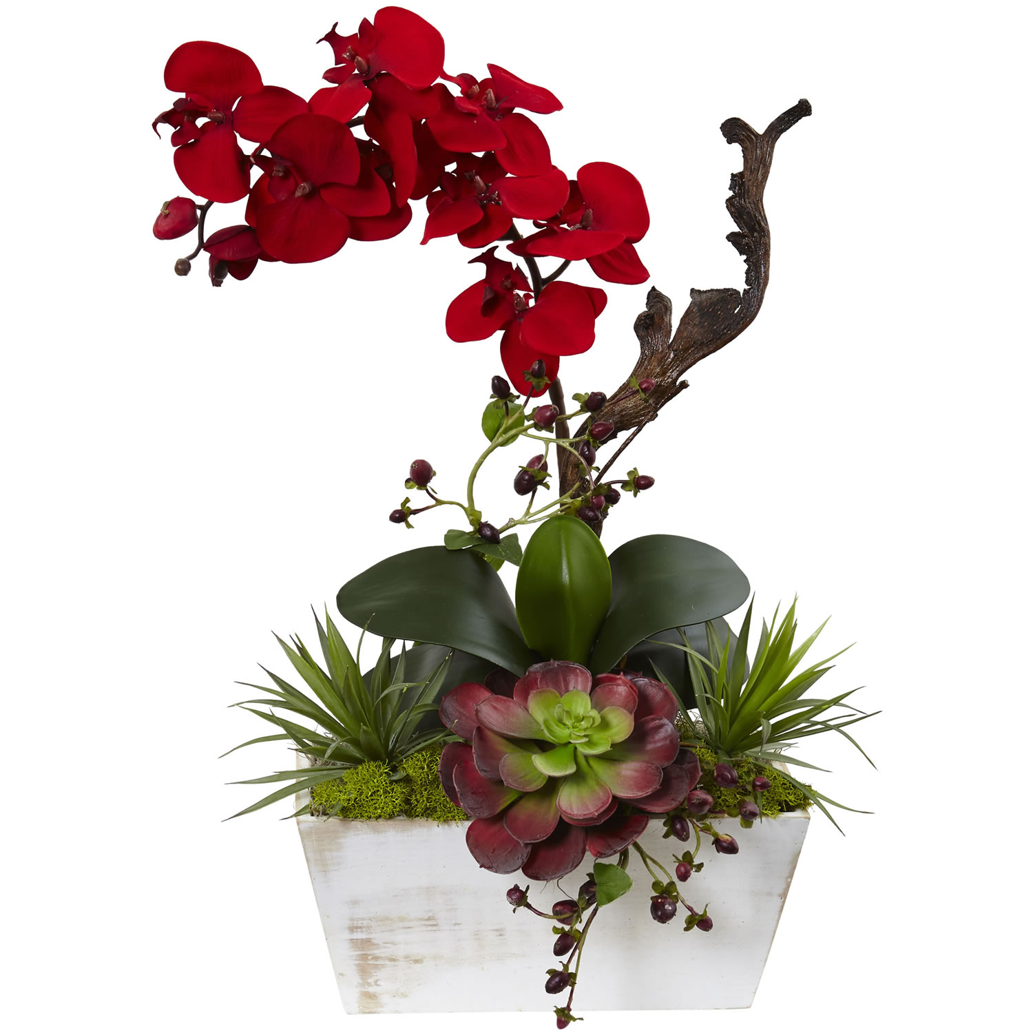 Holiday orchid succulent garden shabby chic planter Christmas orchid arrangements