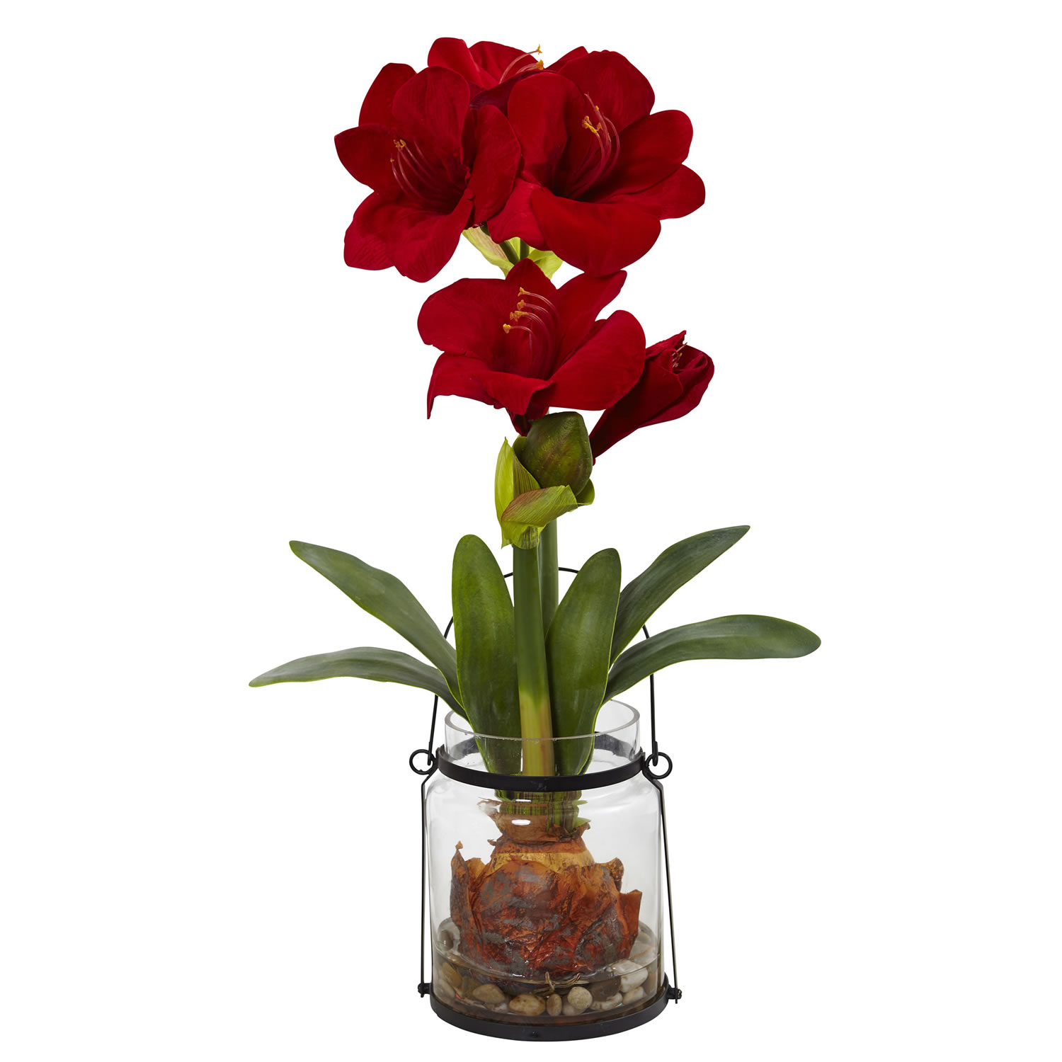 Red amaryllis w rustic pot for Pot amaryllis